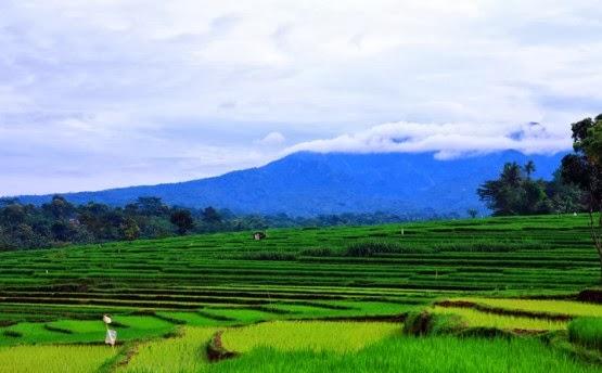 gambar-pemandangan-pesawahan-dan-gunung